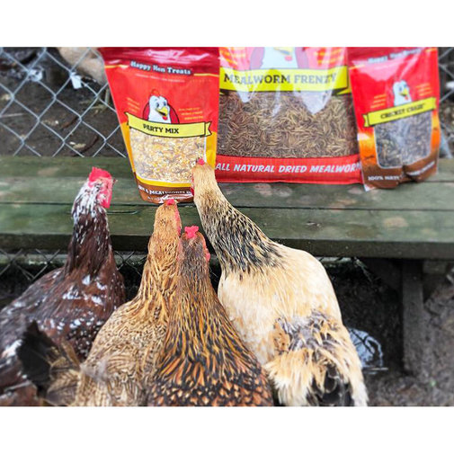 View larger image of 100% Mealworm Frenzy Treats for Chickens