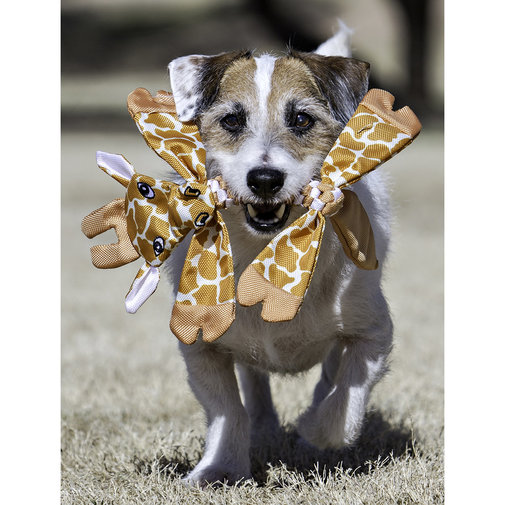 View larger image of Animal Flathead Dog Toy
