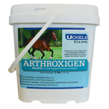 Arthroxigen Joint Support for Horses