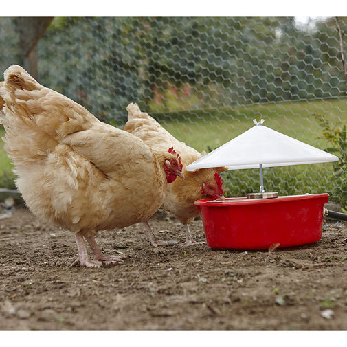 View larger image of Automatic Poultry Waterer