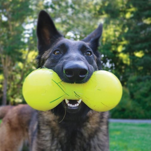 View larger image of Big Dawg Dog Toy