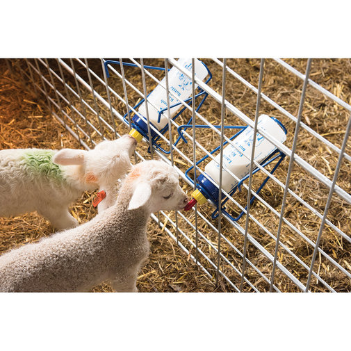 View larger image of Wide Mouth Lamb 'N' Kid Feeding Bottle Rack
