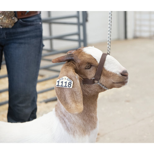 View larger image of Brahma Webb Goat Halter