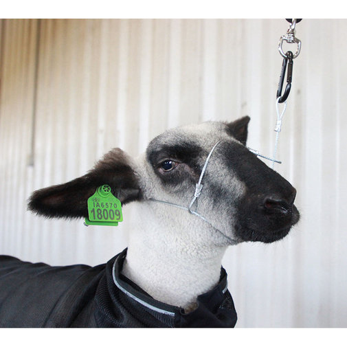 View larger image of Cruise Control Sheep/Goat Halter