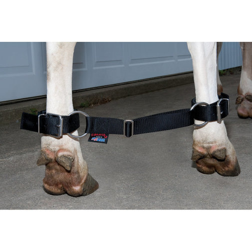 View larger image of Deluxe Adjustable Cow Hobble