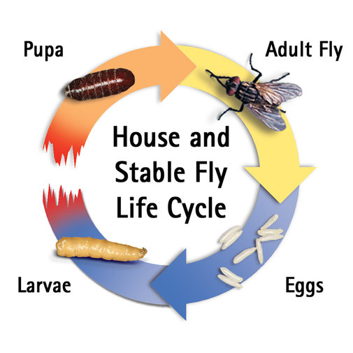 View larger image of Farnam SimpliFly Feed-Thru Fly Control
