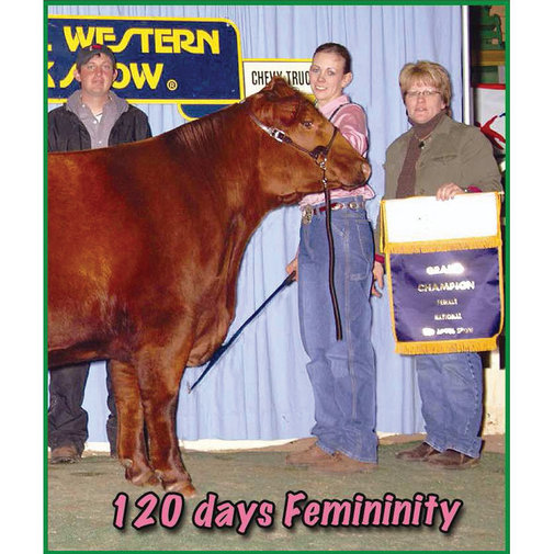 View larger image of Femininity for Heifers