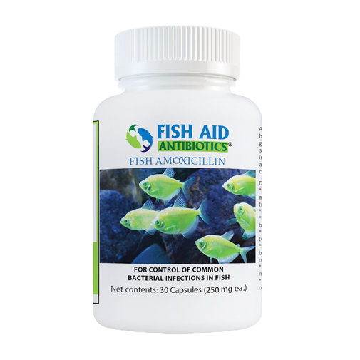View larger image of Fish Amoxicillin
