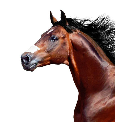 View larger image of Flair Equine Nasal Strips