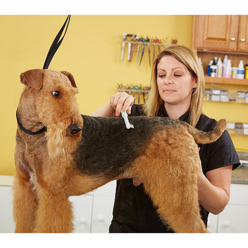 View larger image of Flea Comb for Cats and Dogs