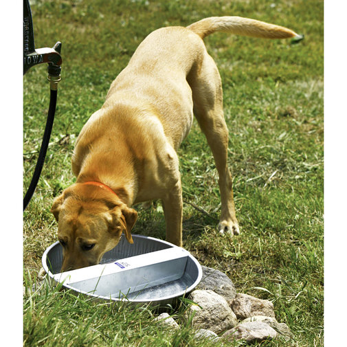 View larger image of Galvanized Ever Full Pet Bowl