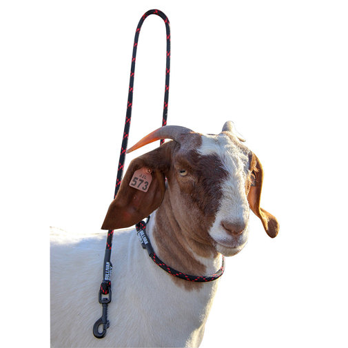 View larger image of Goat Neck Tie with Snap Lead