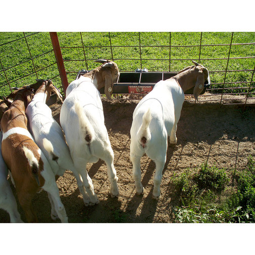 View larger image of Hookover Goat Trough