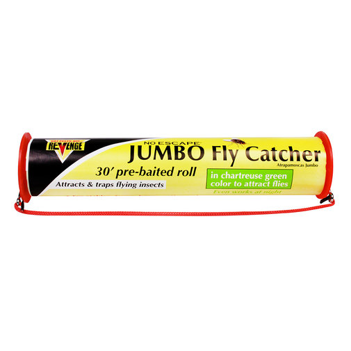 View larger image of Jumbo Fly Catcher