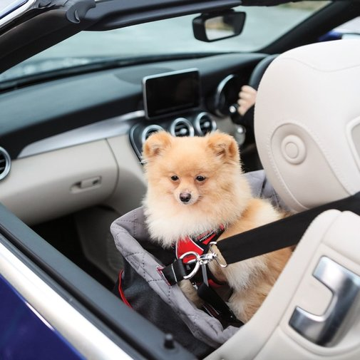 View larger image of KONG Travel Secure Booster Seat for Dogs