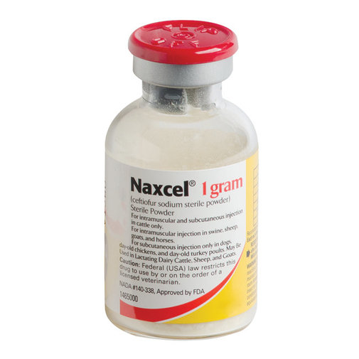 View larger image of Naxcel Powder Rx
