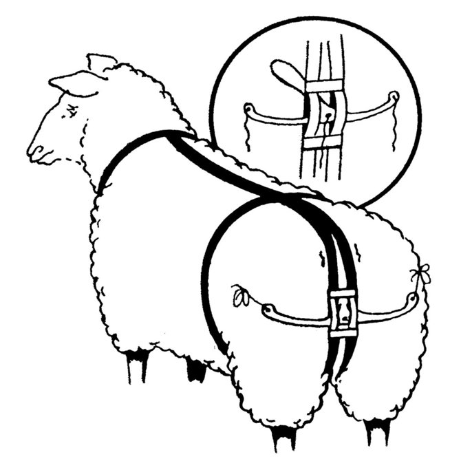 Prolapse Harness For Sheep