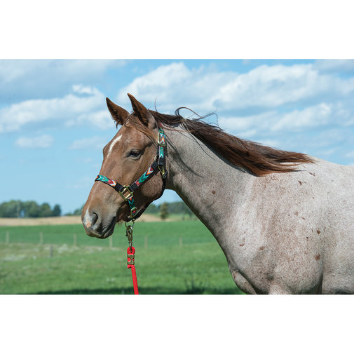 View larger image of Nylon Patterned Adjustable Halter for Horses
