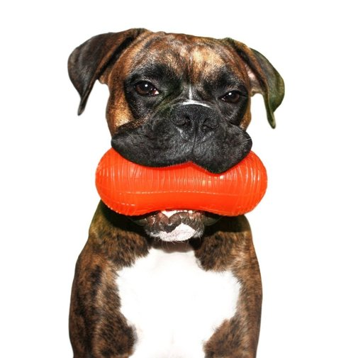View larger image of Peanut Dog Toy