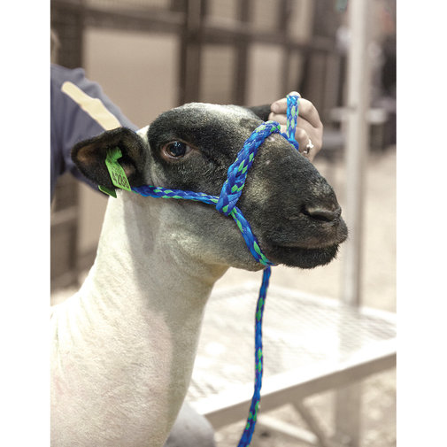 View larger image of Poly Rope Sheep and Goat Halter