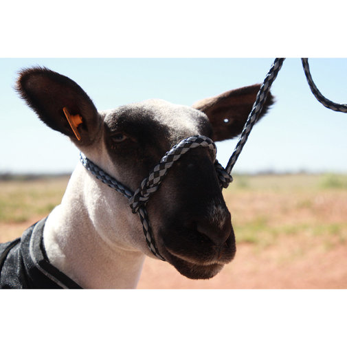 View larger image of Poly Sheep Soft Braid Halter