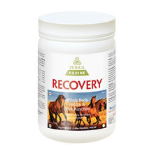 Recovery Equine