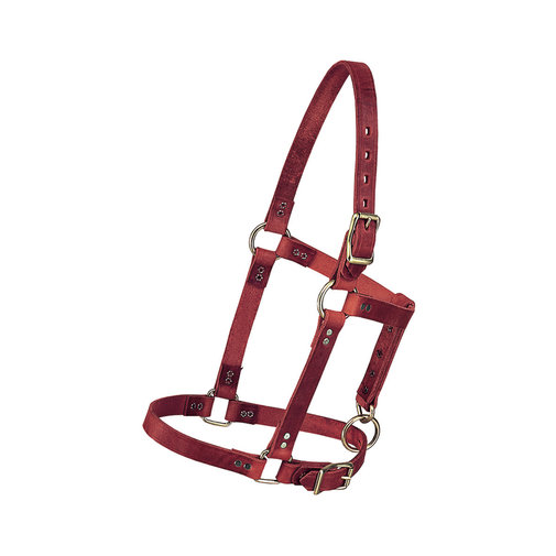 View larger image of Riveted Leather Halter