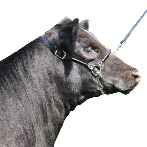 View larger image of Rolled Nose Leather Show Cow Halter