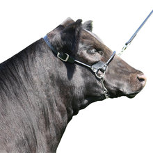 Rolled Nose Leather Show Cow Halter