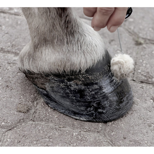 View larger image of Sav-A-Hoof Protectant for Horses