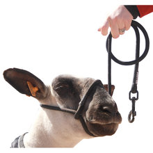 Sheep Halter with Snap Lead