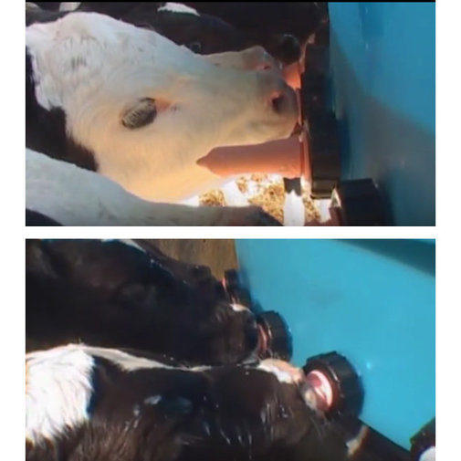 View larger image of Stallion Calf Feeder