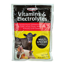 Vitamins & Electrolytes Multispecies Supplement