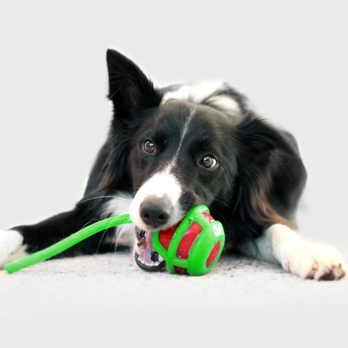 View larger image of Whipper Snapper Dog Toy
