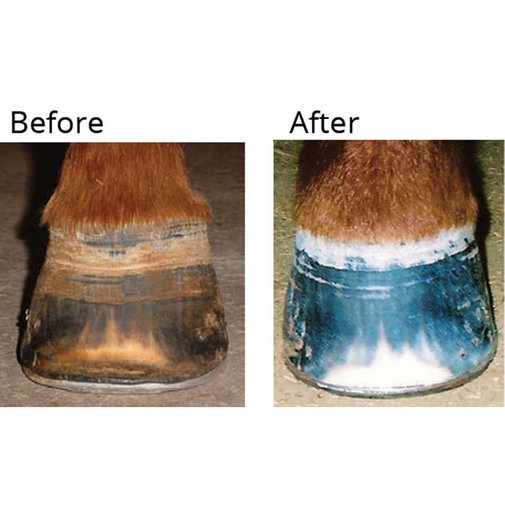 View larger image of Wunder Hoof All Natural Stimulant and Hoof Conditioner