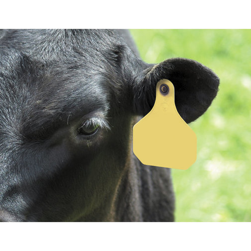 View larger image of XP 820 Insecticide Cattle Ear Tags